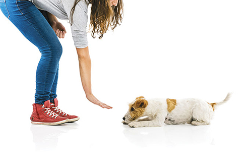 Canine behavior: why is it necessary to follow a behavioral class with your puppy?