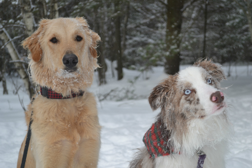 Is your pet well protected in winter?
