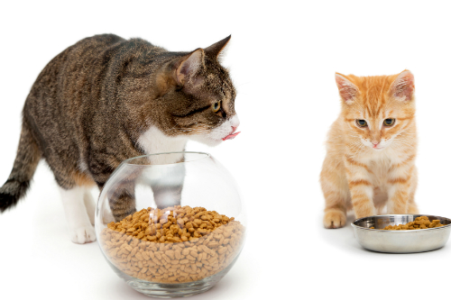 The proper food for your cat