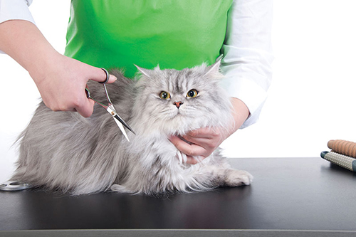 Why choose professional grooming from your pet's veterinary clinic?