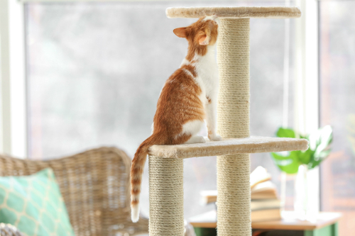What is a scratching post and what is its use?