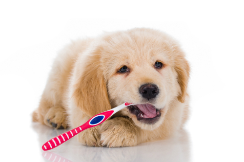 4 steps to get your dog used to getting his teeth brushed