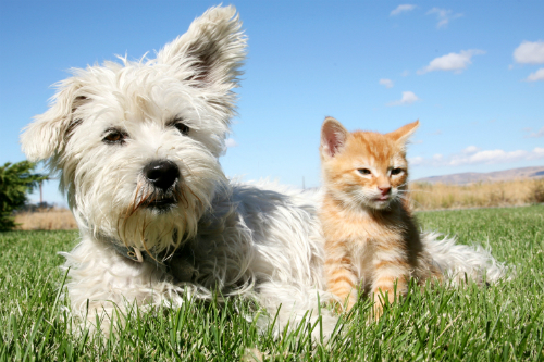 Why is it important to microchip your pet?