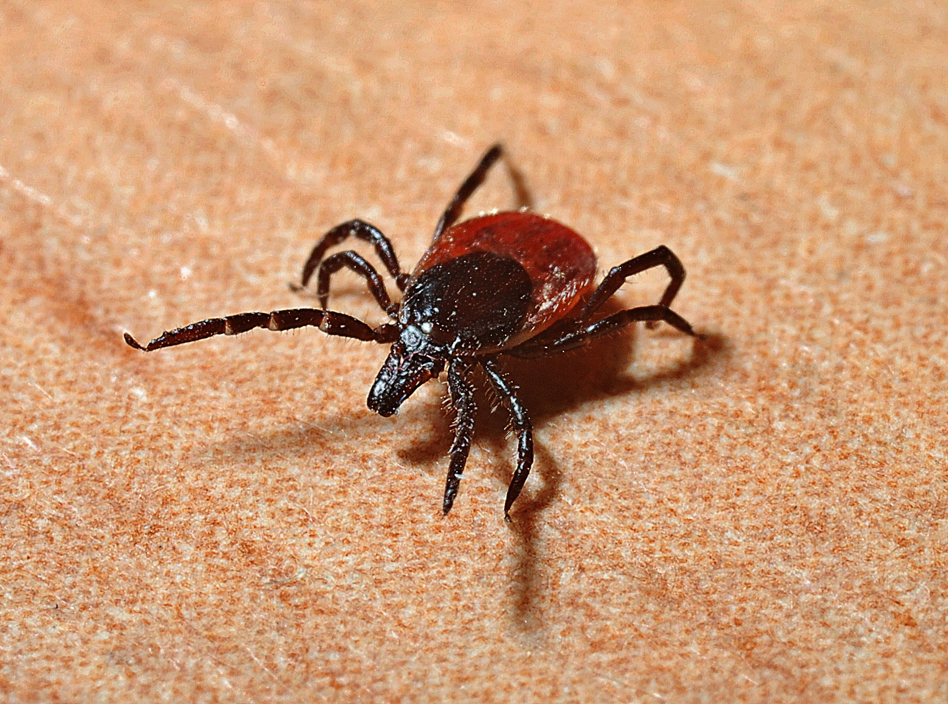 5 tips to protect your dog from ticks