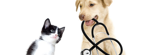 Victoria veterinary hospital preventive medecine